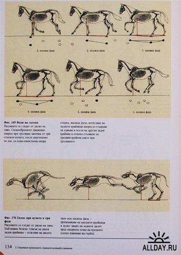 Анатомия животных для художников. Gottfried Bammes