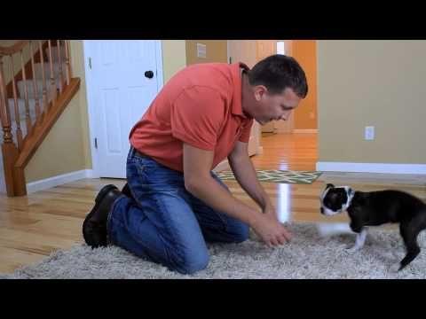 how to train a dog to go potty