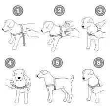 Resultado de imagen para como hacer arnes para perros