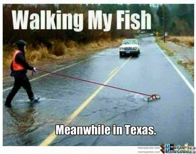 #Walking my #fish Meanwhile in #Texas #rain #humor #funny