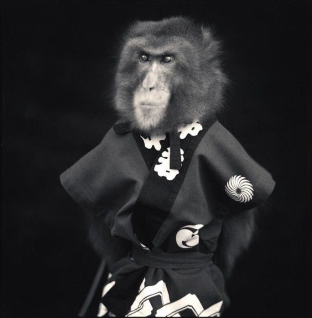 Monkey Series - Hiroshi Watanabe