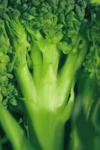 Super easy and delicious way to steam your broccoli and other various ways to prepare it.