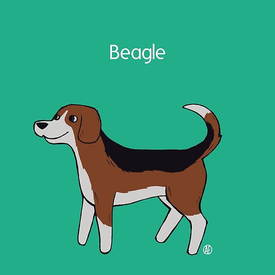 Beagle by AleFlavia