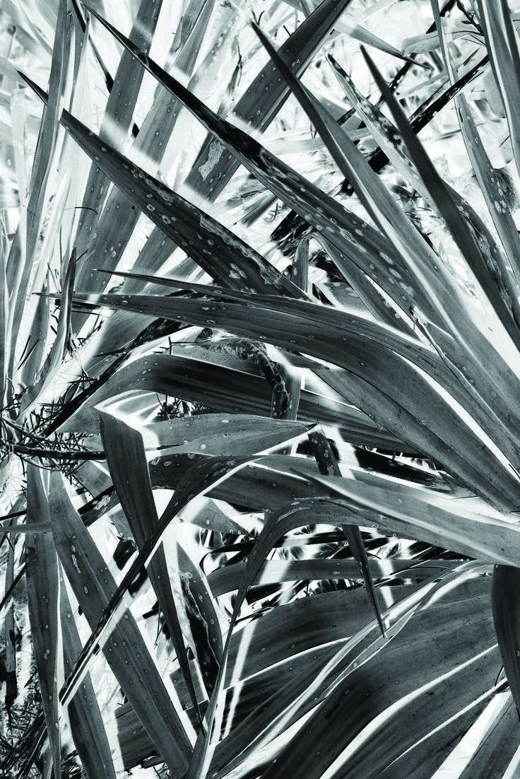 #palmtree #south #france #tropical @ateliersdenimes