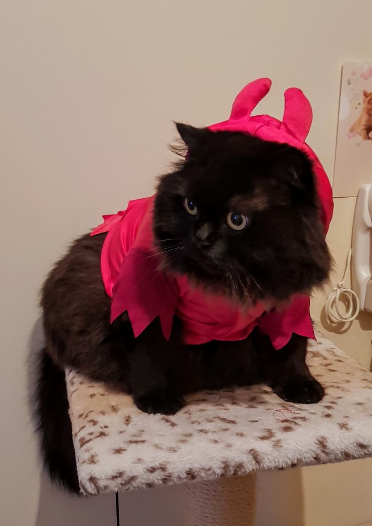 Happy Halloween! 🎃🎃🎃 ( My little devil )