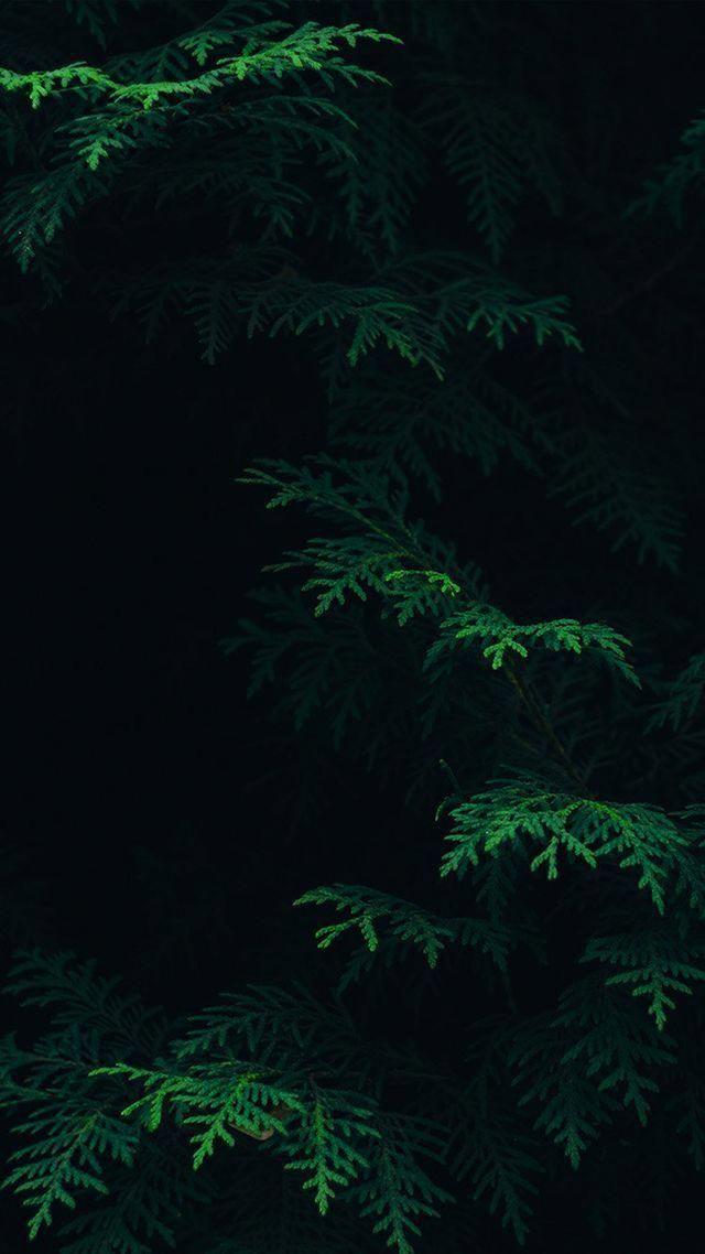 Nature Wallpaper Iphone Iphonewallpapertumblr Green Leaf Wallpaper Dark Green Wallpaper Forest Wallpaper Iphone