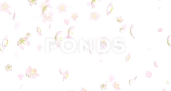 Falling Down Cherry Blossom Flower Heads And Petals Floral Flower Wreath Illustration Decoration Leaf Bouquet In 2020 Cherry Blossom Flowers Petal Petals