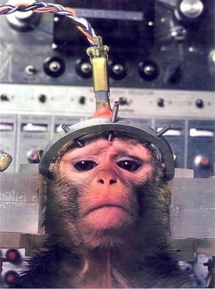 The Rise of the Planet of the Apes: Animal Testing Goes Mainstream | The Urchin Movement