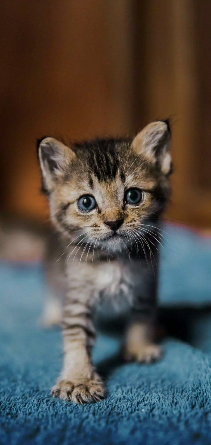 Free Bored Cat Wallpaper Images Of Cute Cats Cute Cat Wallpaper Cat Wallpaper