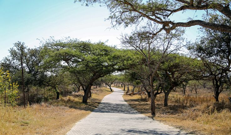 Imagine this was your driveway to home everyday! At Likweti Bushveld Farm Estate, this beautiful Lowveld scene can be a daily reality - 1 hectare stands selling from R895 000! Contact sales@likweti.co.za to find out more.