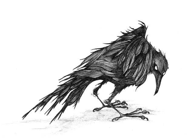Pics Crowa Passing Crow Caught The Nib Tattoos Pinterest Illustrators Jays