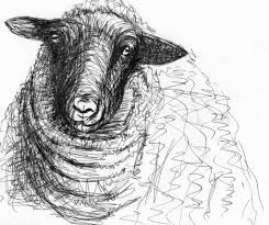Pen drawing of a sheep