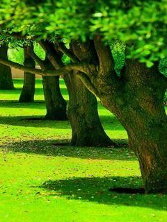 Hãy ngắm nhìn hàng cây xanh đẹp mơ màng trong ánh nắng vàng với tải hình nền 3d – Hàng cây xanh trong nắng tuyệt đẹp cho điện thoại của bạn nhé!