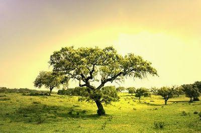Φυσικά φάρμακα για προστασία δέντρων