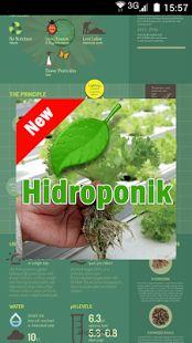 Berkebun dengan sitem hidroponik