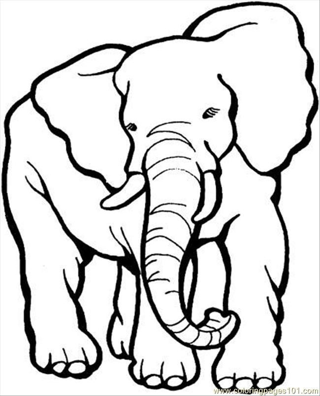 24 best y Blank Pattern Elephants images on Pinterest Coloring