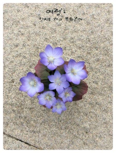 조화공예(아트플라워) 연구과정 깽갱이풀 Jeffersonia of art flower crafted http://blog.naver.com/koreapaperart  #조화공예 #종이꽃 #페이퍼플라워 #한지꽃 #아트플라워 #조화 #조화인테리어 #인테리어조화 #인테리어소품 #주문제작 #수강문의 #광고소품 #촬영소품 #디스플레이 #artflower #koreanpaperart #hanjiflower #paperflowers #craft #paperart #handmade #깽깽이풀 #Jeffersonia