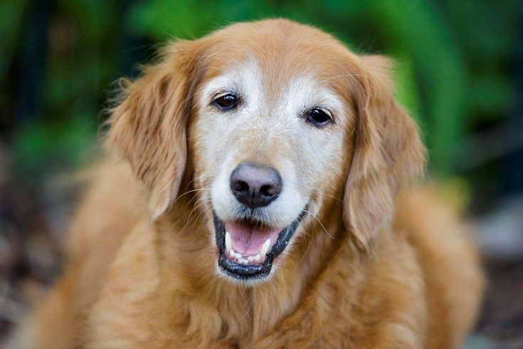 Top 5 Reasons Why Senior Dogs Rock   DogVacay Official Blog