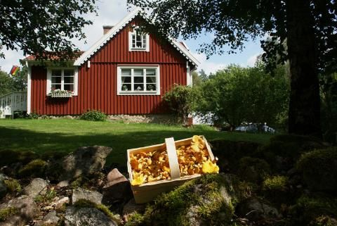 Rundreise Südschweden: Schweden mit Kindern - [GEO]