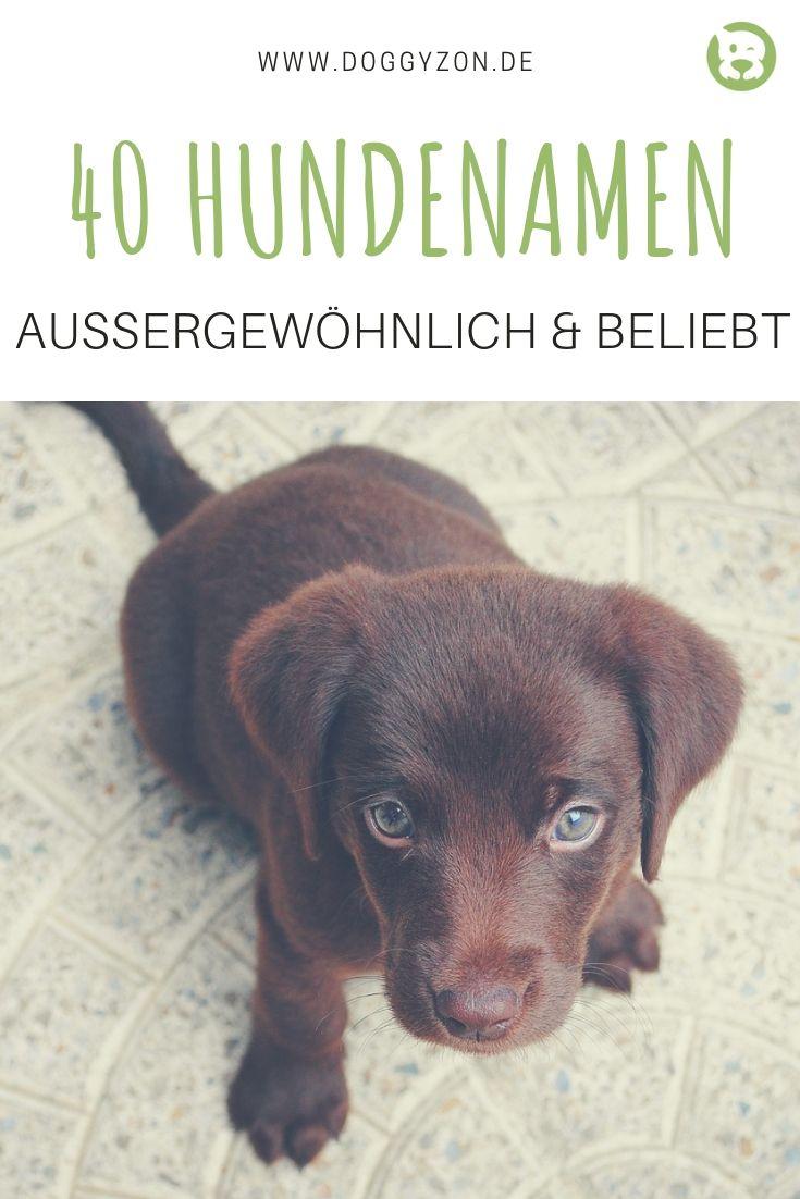 Namen Für Hunde