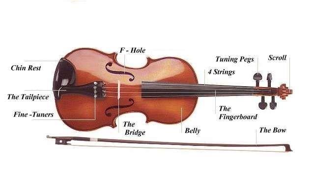 Parts of your violin