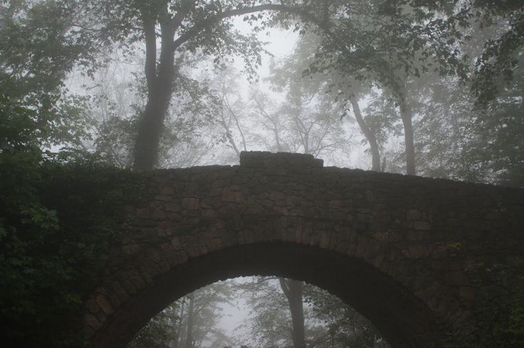 Der Harz im Nebel - mystisch und wunderschön. Wieso der Harz auch bei grauem Wetter definitiv eine Reise wert ist..