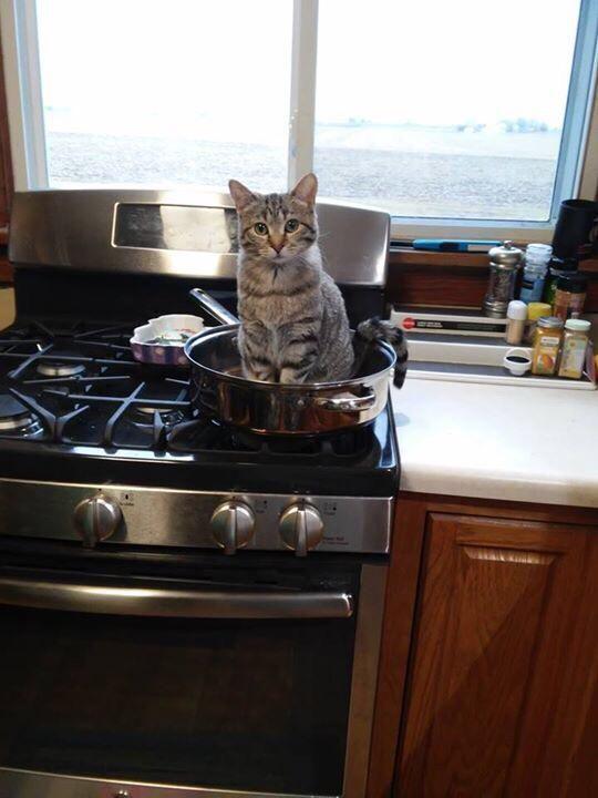 【捨身】飼い猫の前で「飯食う金もねぇわ〜」とグチったらwwwwwww