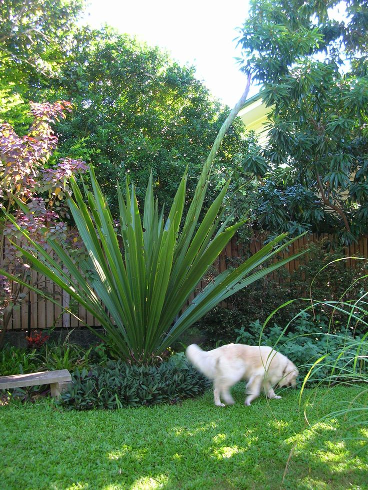 gymea lily leaves - Google Search