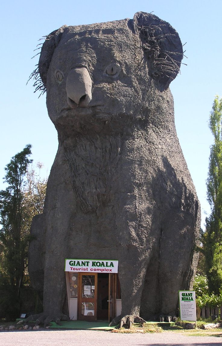 The 46 foot tall Giant Koala resides in Dadswells Bridge, Victoria