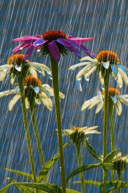 Flowers. Rain. :)