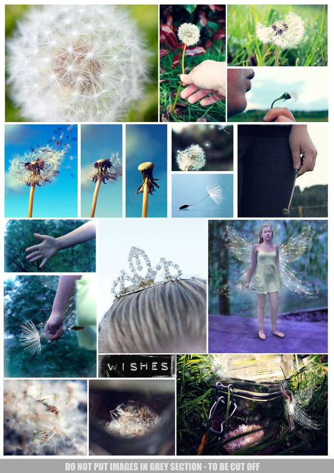 Wishes NCEA Level 2 Photography Folio Board 1 of 2 by LeahStewart