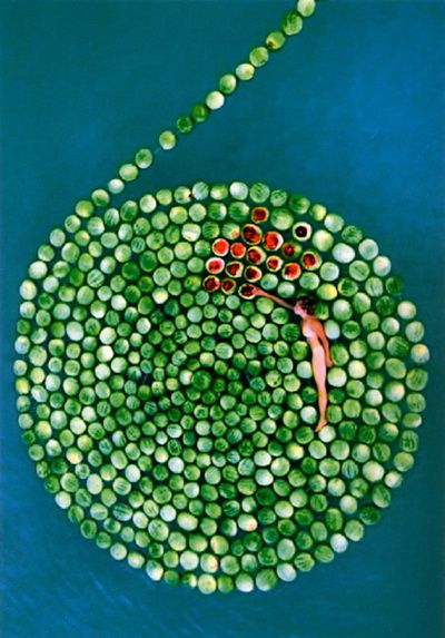 "titled: ""Because swimming naked in the middle of watermelons, I can get tempted"""