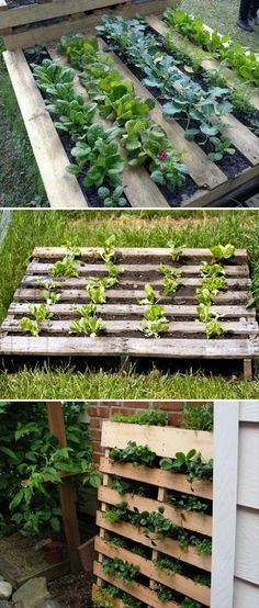 Dump A Day Fun DIY Pallet Ideas -RAISED BEDS FOR THE GARDEN. Could use for hosta starters