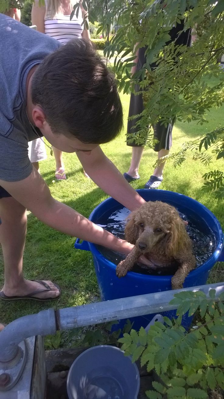 Another bathing dog