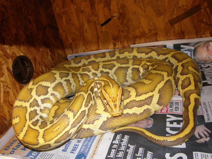 123 best reptiles as pets images on Pinterest | Reptiles ...