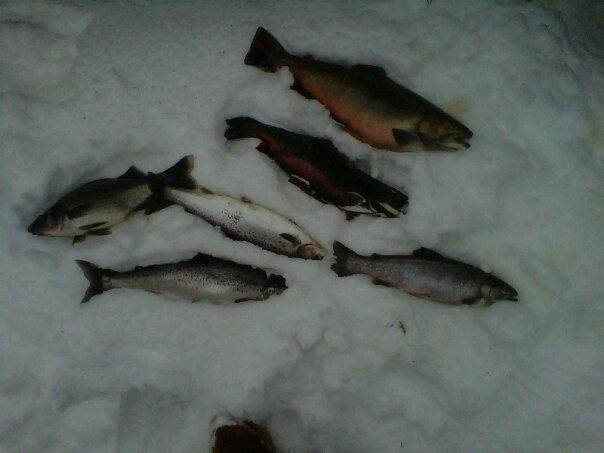 Ice Fishing at the Big Narrows, Lincoln ME