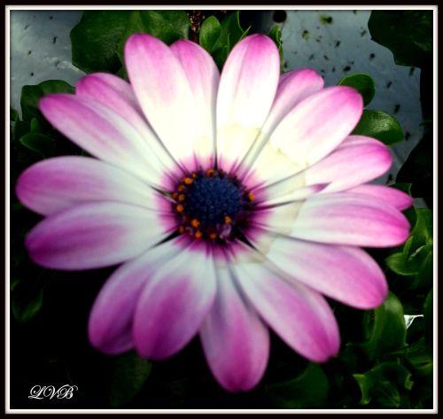 joy's notepad: Flower girl!