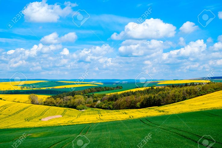 Wavy Meadows Spring Landscape In South Moravia, Czech Republic ...