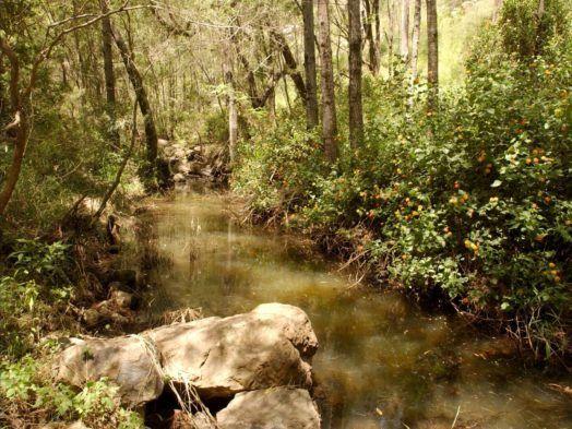 Flinders-Goolman Conservation Estate - Discover Ipswich
