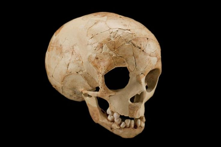 Dederiyeh, Syria, 1993. Discovered by a team led by Takeru Akazawa. Between 70,000 and 50,000 years old - Homo neanderthalensis. This skull is from the skeleton of a two-year-old Neanderthal who grew at a rate similar to that of modern humans, with a long childhood. As childhood lengthened, parents devoted more time and energy to caring for the young.