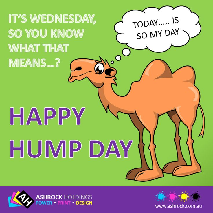 Happy Wednesday !!! #humpday #happyhumpday #design #camel #ashrock #wednesday