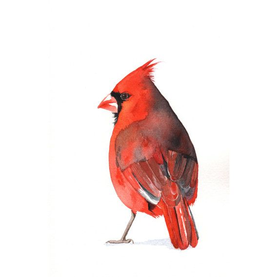 Cardinal Watercolor Painting - Print of watercolor painting. - 5 by 7 print via Etsy