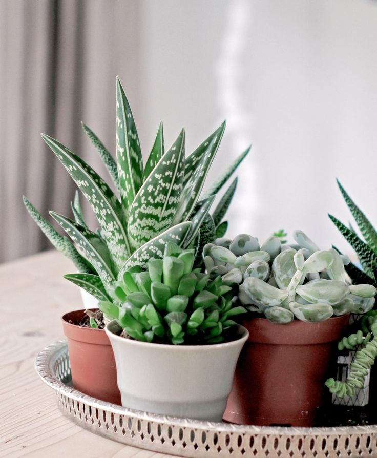 Succulents at home | Photograpy Tjerk Spannenburg | @de peppels