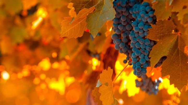 #Autumn #autunno #uva #harvest #vendemmia  #grapes #grapesfruit #blue #blu #purple #viola #orange #arancio #red #rosso #yellow #giallo #sun #light #luce #sole