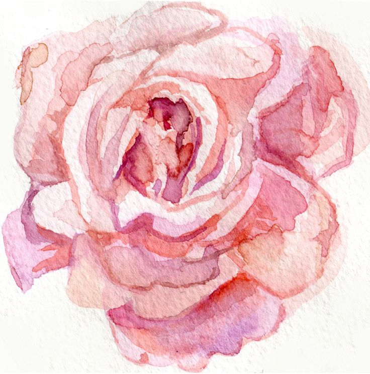 1000 ideas about watercolor rose tattoos on pinterest for How to paint a rose in watercolour
