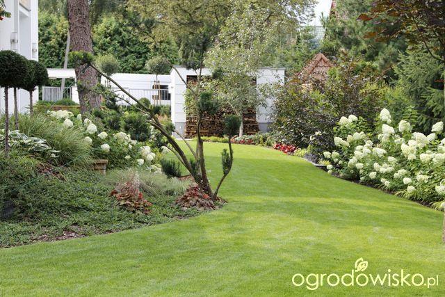 Zimozielony ogród przy białym domu - strona 222 - Forum ogrodnicze - Ogrodowisko
