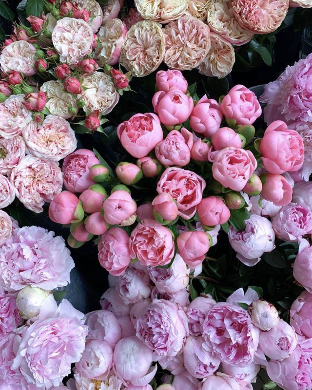 Tumblr is a place to express yourself, discover yourself, and bond over the stuff you love. It's where your interests connect you with your people. Beautiful Flower Arrangements, Fresh Flowers, Spring Flowers, Beautiful Flowers, Art Floral, Floral Flowers, Lotus Flowers, My Flower, Flower Power