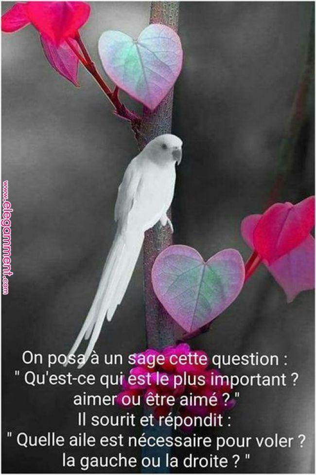 Citations et proverbes français à lire. Une nouvelle quotation courte ou proverbe connu d'web est ajouté régulierement pour vous divert…