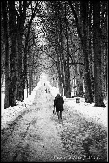 Łazienki Park  in Warsaw, Jan 2011