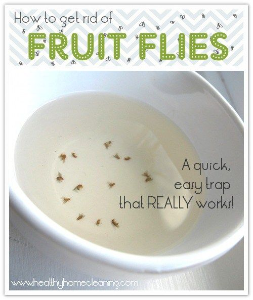 A simple, effective, & inexpensive way to get rid of fruit flies in your home using a homemade trap of wine vinegar and dish soap.